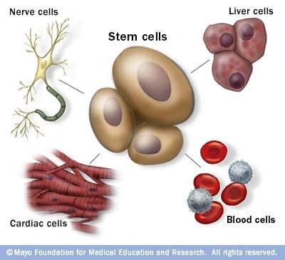 Diseases adult stem cells cure