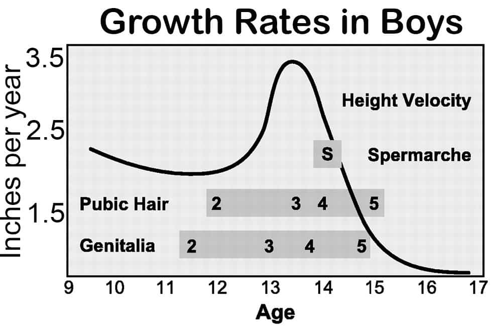 Age penis growth ends