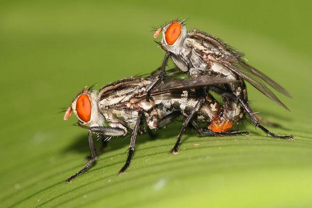 Bugs crawling on penis