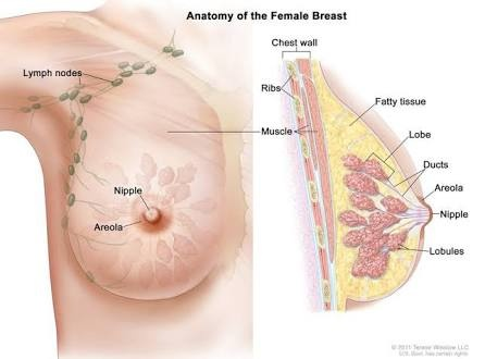 Creating breast milk in mens breasts