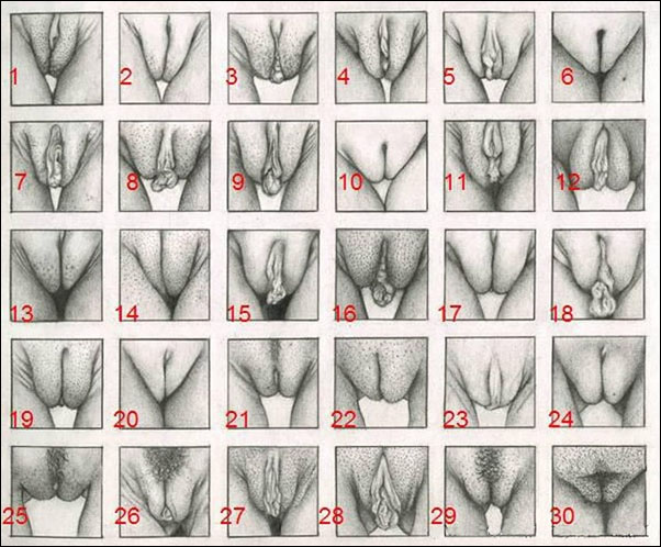 All shape and sizes of pussy